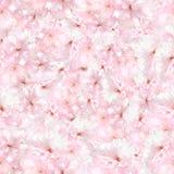 Beautiful seamless pattern with sakura flowers Stock Images