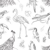 Beautiful seamless pattern with tropical birds and exotic leaves hand drawn with contour lines on white background Stock Photo