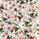 White exotic flowers seamless pattern background. Beautiful seamless pattern wallpaper background with white exotic plumeria flowers royalty free illustration