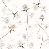 Beautiful seamless rose pattern Royalty Free Stock Image