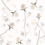 Beautiful seamless rose pattern Royalty Free Stock Image