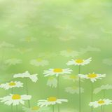 Beautiful seamless spring pattern. With camomiles on green field Stock Photography