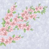 Beautiful seamless spring pattern Stock Photo