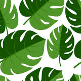 Beautiful seamless tropical jungle floral graphic seamless backg Stock Photography