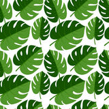 Beautiful seamless tropical jungle floral graphic seamless backg Royalty Free Stock Image