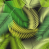 Beautiful seamless tropical jungle floral pattern background with different palm leaves Stock Photos