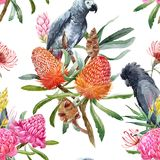 Watercolor tropical australian pattern. Beautiful seamless tropical pattern with australian banksia flowers and black parrot royalty free illustration