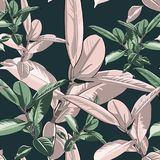 Beautiful seamless vector floral pattern, spring summer background with tropical ficus, jungle leaf. Exotic botanical wallpaper. Dark backdrop Stock Photos