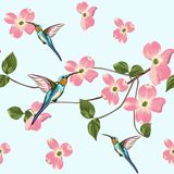 Beautiful seamless vector floral summer pattern background with hummingbird and spring magnolia flowers. stock illustration