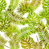 Beautiful seamless vector floral summer pattern background with tropical palm leaves and animal prints.Perfect for. Wallpapers, web page backgrounds, surface Stock Photography