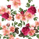 Beautiful seamless vector pattern with detailed  roses Royalty Free Stock Photos