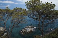 Beautiful seas of Spain. Marvelous summer seas of Lloret de Mar, Spain, hiding behind the trees Stock Images
