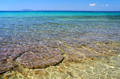 Beautiful seascape. Seascape with clear see-through turquoise water and sea plants at the sea bottom Stock Photography