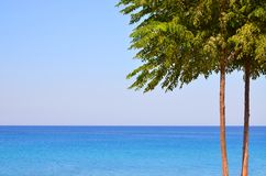 Beautiful seascape, lonely tree on the background of azure sea and blue sky in calm weather. 1 royalty free stock photo