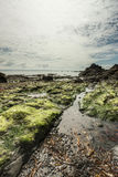 Beautiful seascape on low tide Royalty Free Stock Images