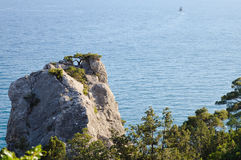 Beautiful seascape. Nature composition. Pine tree on rock Royalty Free Stock Photography