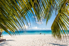 Beautiful seascape with palm tree branches Stock Photography