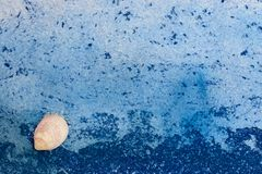 Seashell on blue sea background stock image