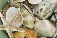 Beautiful seashell Stock Images