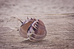 Beautiful seashell closeup. Stock Images