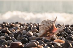 Beautiful seashell on the sea stony shore Royalty Free Stock Photos