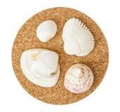 Beautiful seashells on the circular cork base, isolated Royalty Free Stock Image