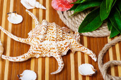 Beautiful seashells close-up  Royalty Free Stock Photo