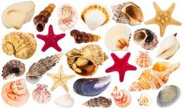 Beautiful seashells collection Royalty Free Stock Photo