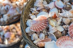 Beautiful seashells displayed in baskets stock image