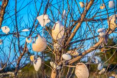 Beautiful seashells hang on a tree in Anna Maria Island, Florida. A very fine sandy beach with colorful seashells in it at the island of Anna Maria Key royalty free stock images