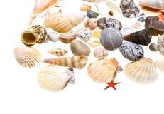 Beautiful seashells isolated on white Royalty Free Stock Photo