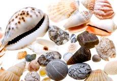 Beautiful seashells isolated on white Royalty Free Stock Images