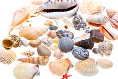 Beautiful seashells isolated on white Stock Photo