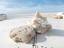 Large shells on the dock in front of the beach royalty free stock photo