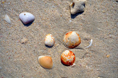 Seashells on the sand Stock Photos