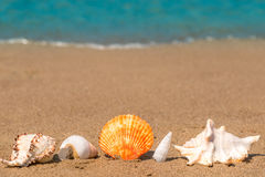 Beautiful seashells on the sand lined up Royalty Free Stock Photography