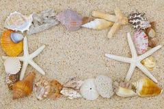 Beautiful seashells and starfish arranged as a border on sand ba Stock Image