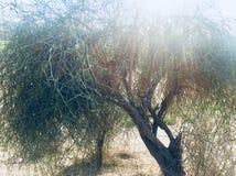 Autumn and winter season beauty stock photo
