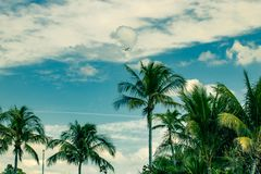 Sky and palms and the air-jet flying above royalty free stock photos