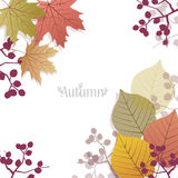 Beautiful seasonal Background with autumn leaves and berries Royalty Free Stock Photo