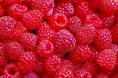 A beautiful selection of freshly picked ripe red raspberries. Royalty Free Stock Images