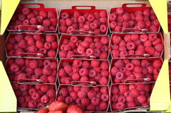 Beautiful selection of freshly picked ripe red raspberries in market Royalty Free Stock Image