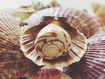 Beautiful selection of unusual seaside shells Stock Photo