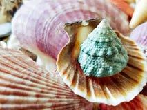 Beautiful selection of unusual seaside shells.  Royalty Free Stock Photos