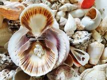 Beautiful selection of unusual seaside shells Royalty Free Stock Photography