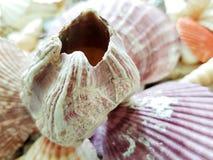 Beautiful selection of unusual seaside shells Stock Image