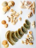 Beautiful selection of unusual seaside shells. Shells close up on a white background Royalty Free Stock Images