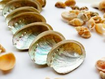 Beautiful selection of unusual seaside shells. Shells close up on a white background Stock Photography