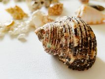 Beautiful selection of unusual seaside shells. On a white background Stock Photography