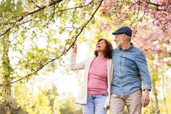 Beautiful senior couple in love outside in spring nature. Royalty Free Stock Image
